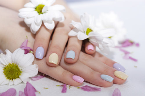 well-groomed, manicured fingers of the hand lie in the cut of petals and in the color of chrysanthemum